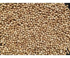 Семена кориандра сорт Арома