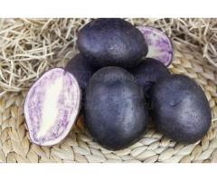 Семенной картофель ГУРМАН (элита) от СеДеК