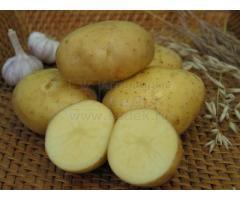 Семенной картофель ТРИУМФ (элита, суперэлита) от СеДеК