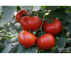 Семена томата БАРИН F1 (СеДеК)